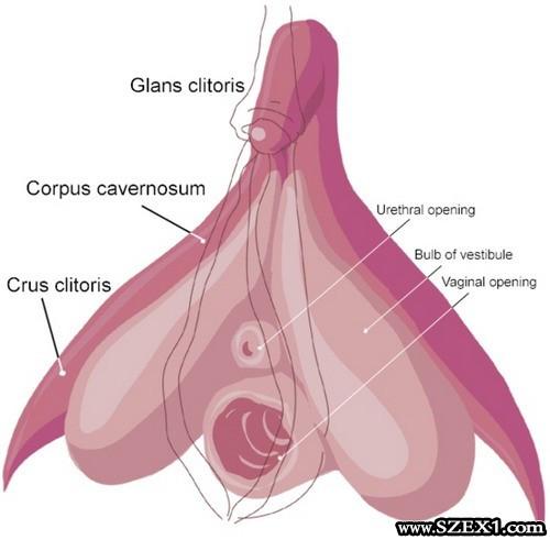 csiklo_clitoris