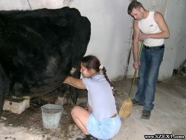 Istállóban szexelnek a tehénnel is